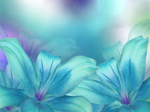blue-turquoise-lilies-flowers-turquoise-purple-blue-blurred-background-closeup-bright-floral-composition-card-holiday-79772270